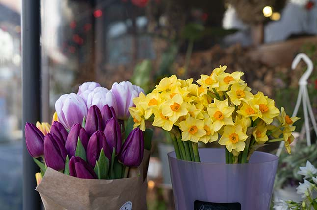 Daffodils and tulips at the Flower Shop Bruton, Somerset